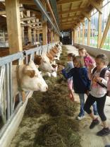 Tag der Milch im Grabnerhof